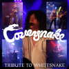 Coversnake (Whitesnake)