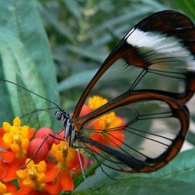 Mr Butterfly